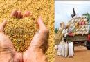 அடுத்த போகத்தில் ஒரு கிலோ நெல்லை 70 ரூபாவுக்கு கொள்வனவு செய்ய அரசாங்கம் நடவடிக்கை